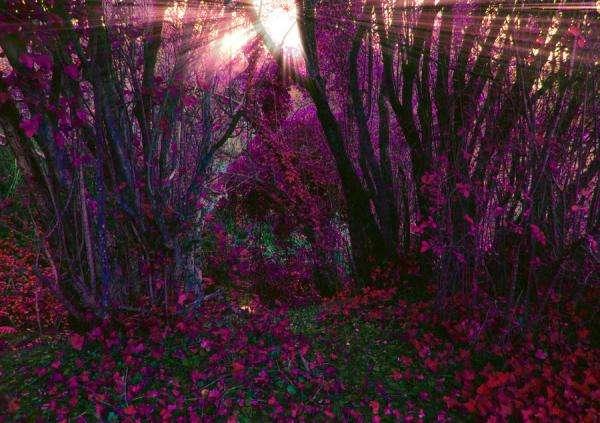 Enchanting Arboreal Photography