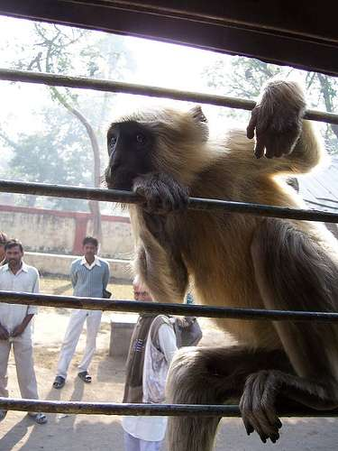 Monkey Suits to Scare Real Monkeys