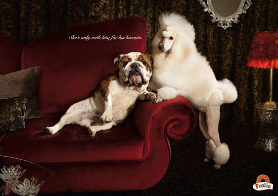Canine Gold-Digger Ads
