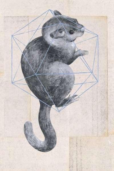 Geometric Animal Illustrations