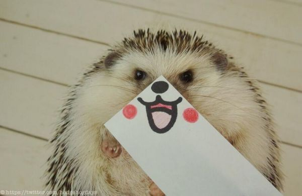 Expressive Hedgehog Photography