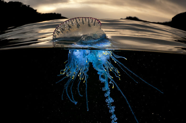 Divided Sea Creature Photography