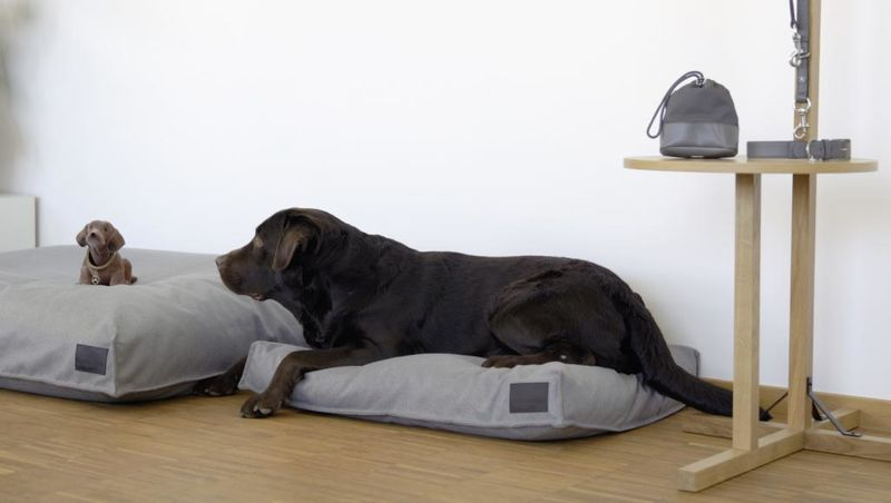 Luxe Car Brand Dog Accessories