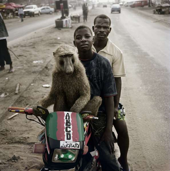 Monkey Companions