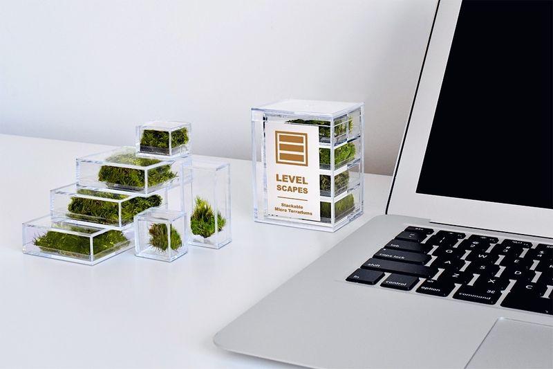 Stackable Desktop Terrariums