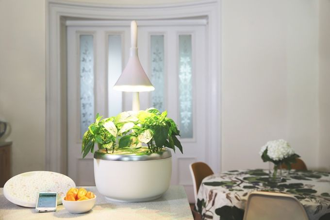 Intelligent Indoor Microgardens
