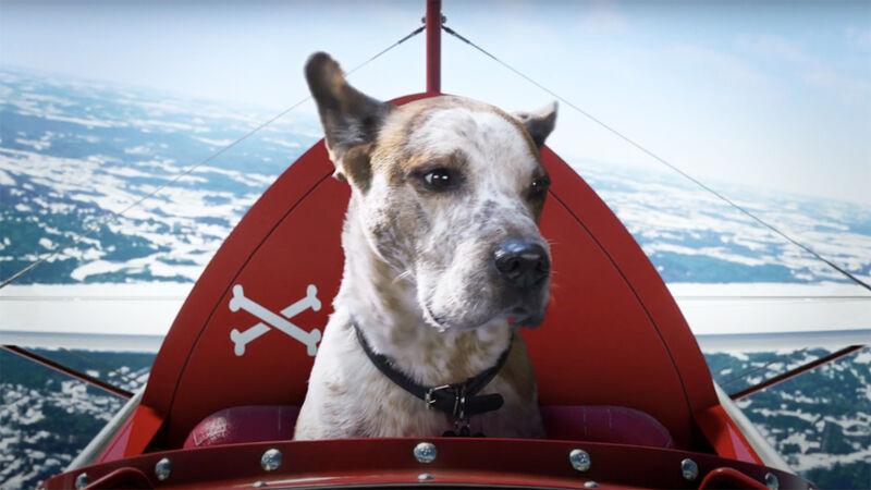 Dreamy Dog Tech Ads