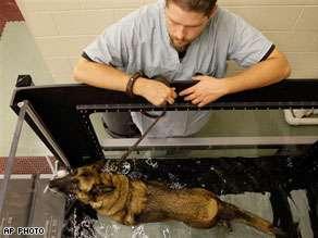 $15M Animal Rehab Centers