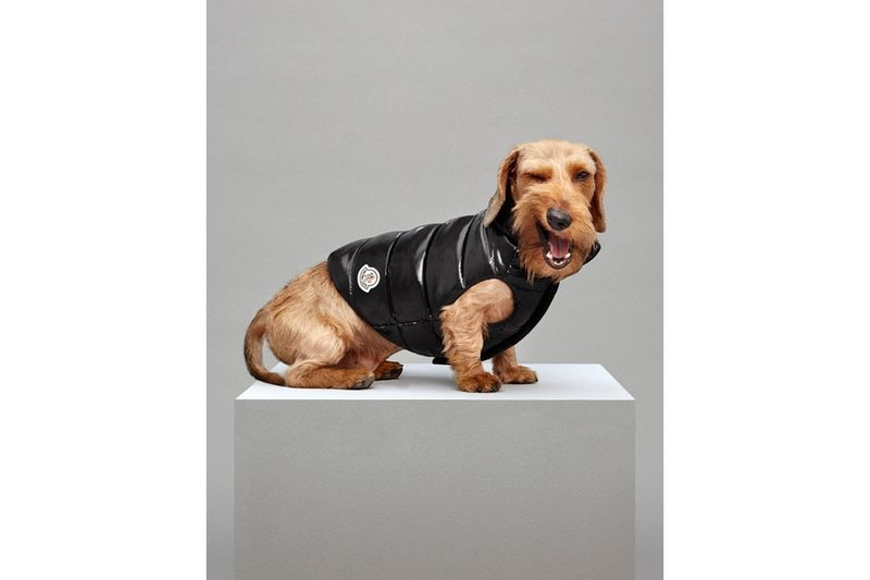 Canine Puffer Jackets