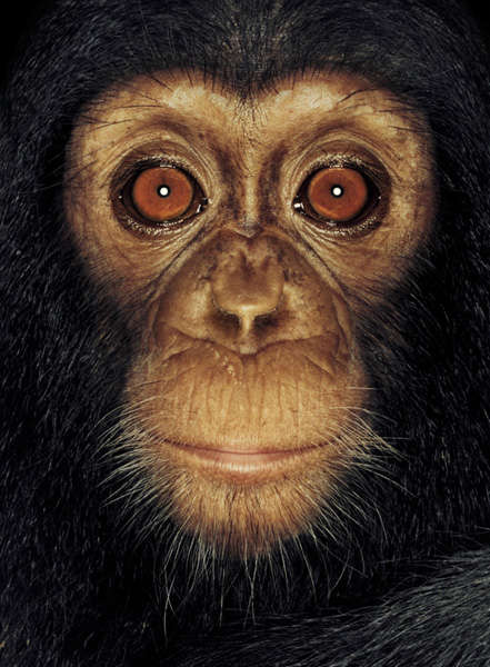 Closeup Primate Photography