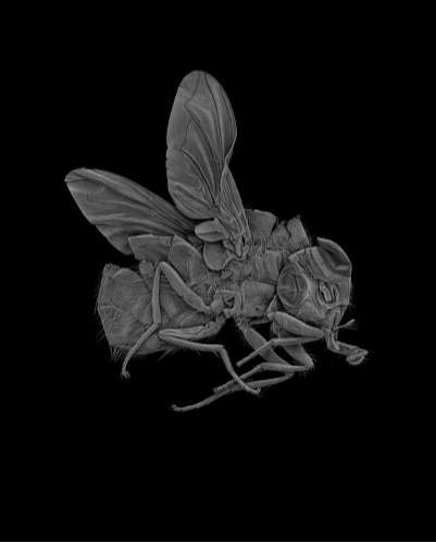 Scanned Insects as Art