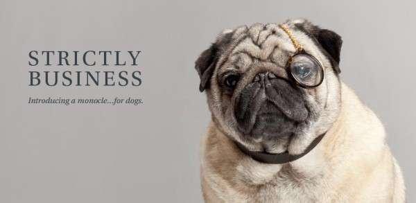 Faux Canine Eyewear Lines