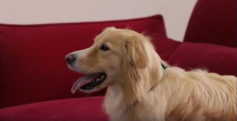 Pet-Calming Videos