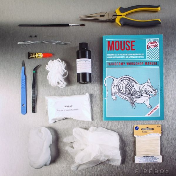 DIY Rodent Taxidermy Guides