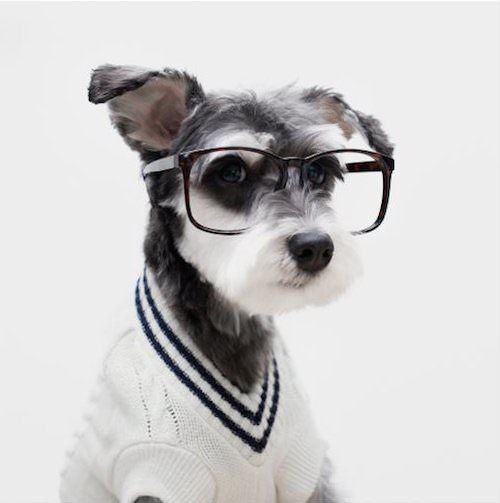 Stylish Dog Ads