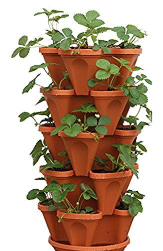 Tiered Strawberry Planters