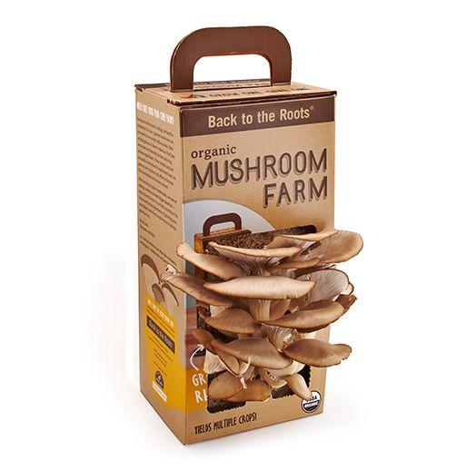 Miniature Mushroom Gardens
