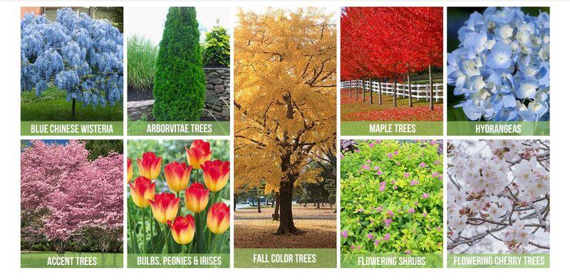 Virtual Plant Nurseries