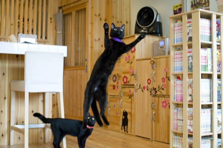 Black Cat-Specific Cafés