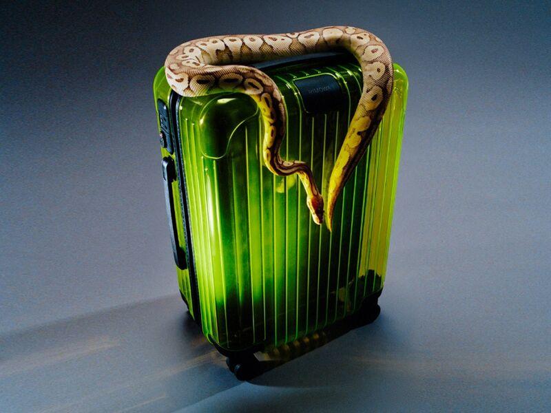 Transparent Neon Luggage