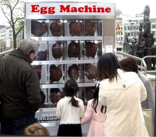 Chicken Vending Machines
