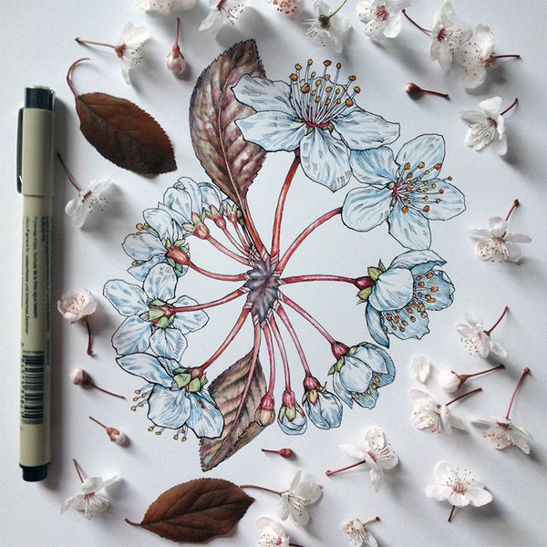 Meticulous Floral Illustrations