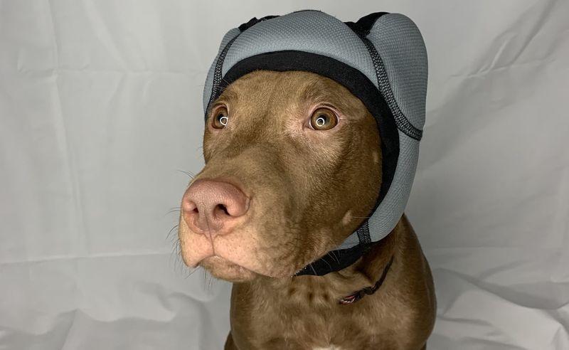 Noise-Blocking Canine Headsets