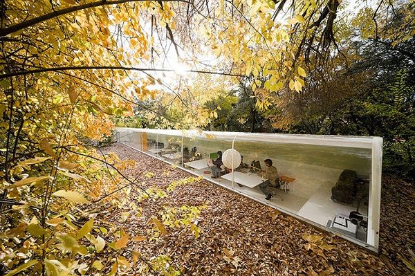 Forest Secluded Office Spaces