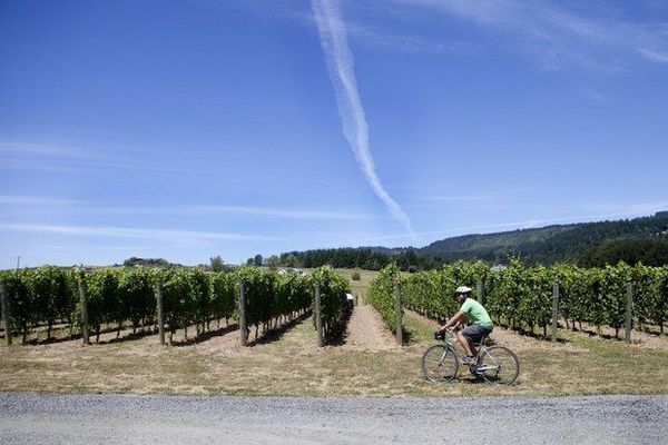 Cyclist Wine Tours