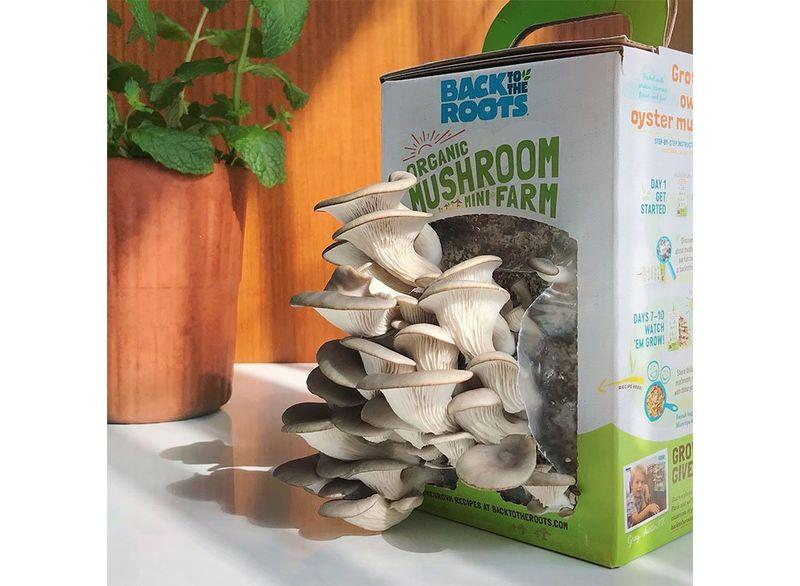 Personal Organic Mushroom Kits : organic mushroom farm