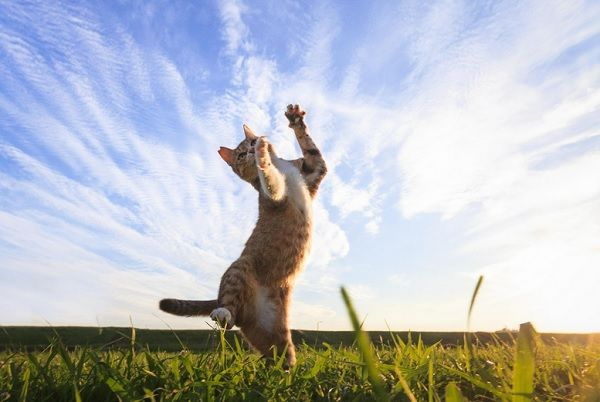 Frolicking Outdoor Feline Photography Outdoor Cat Photos