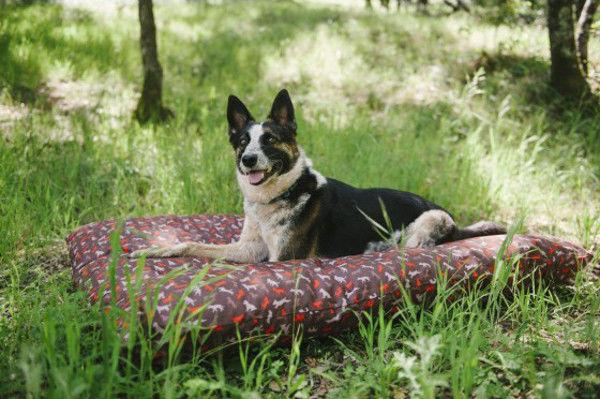 Outdoor Dog Accessories
