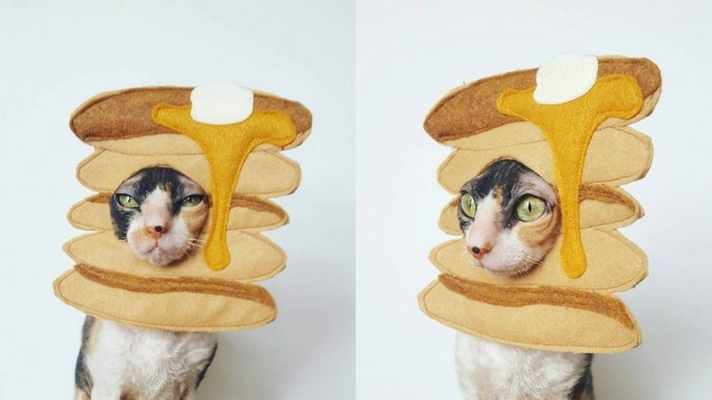 Novel Pancake-Themed Pet Costumes
