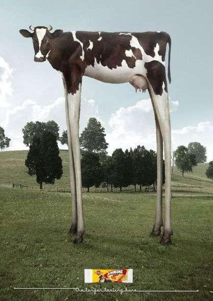 Long Legged Cow Campaigns Pedigree Jumbone Maxi