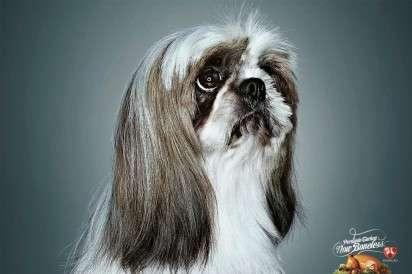 Sad Puppy-Eyed Ads