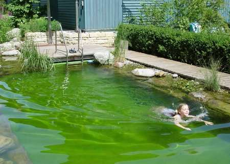 Personal Swimming Ponds Swimming With Plants And Fish Is