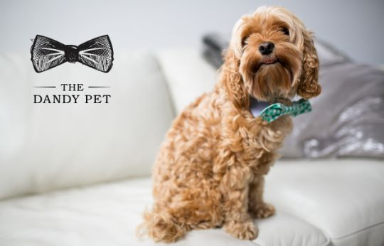Dapper Pet Accessory Branding