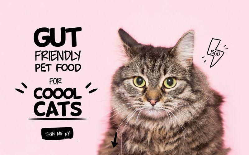 Gut-Friendly Pet Foods