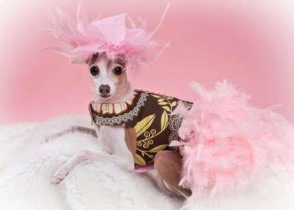 Doggie Boudoir Fashions