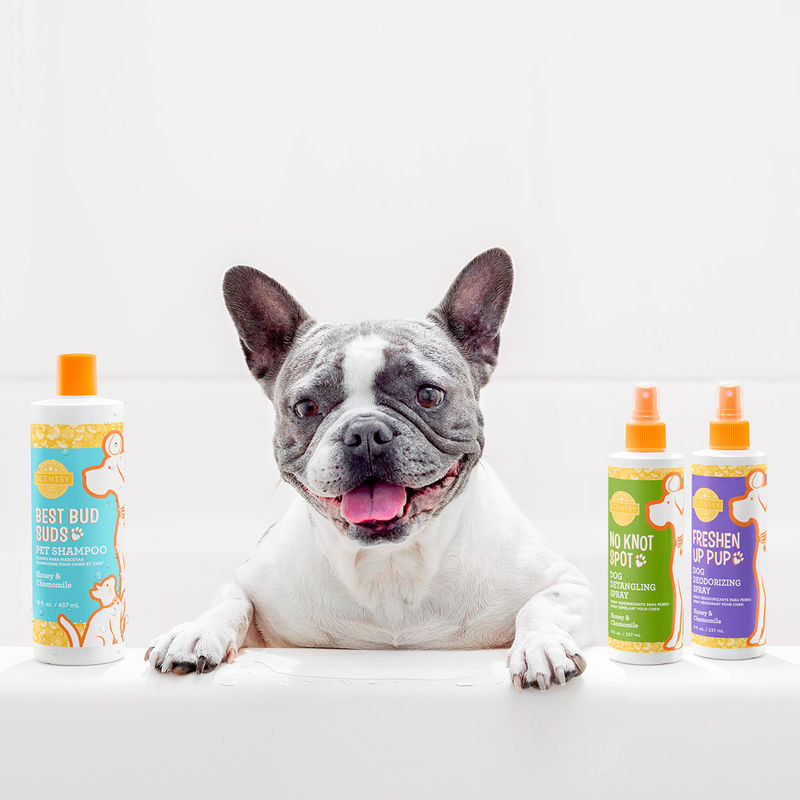 Fragrance-Focused Pet Shampoos