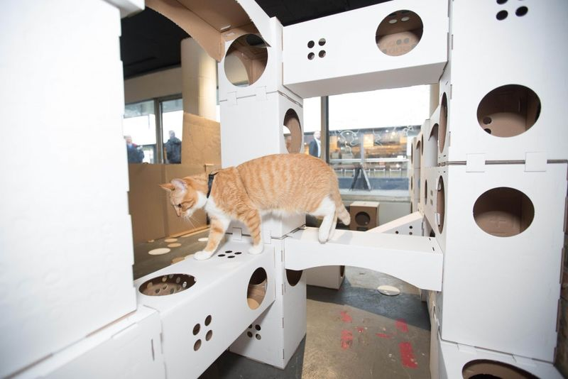 Pop-Up Kitty Playhouses