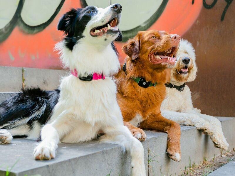 Multifunctional Pet Trackers