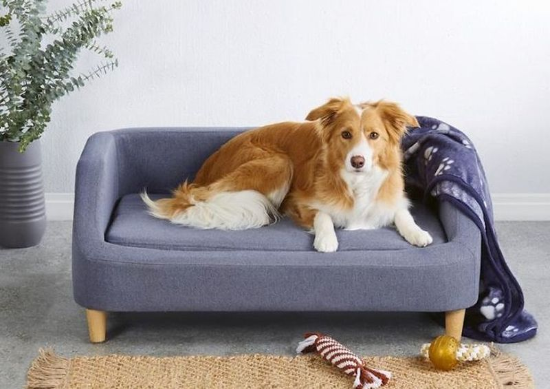 Limited-Edition Pet Furniture