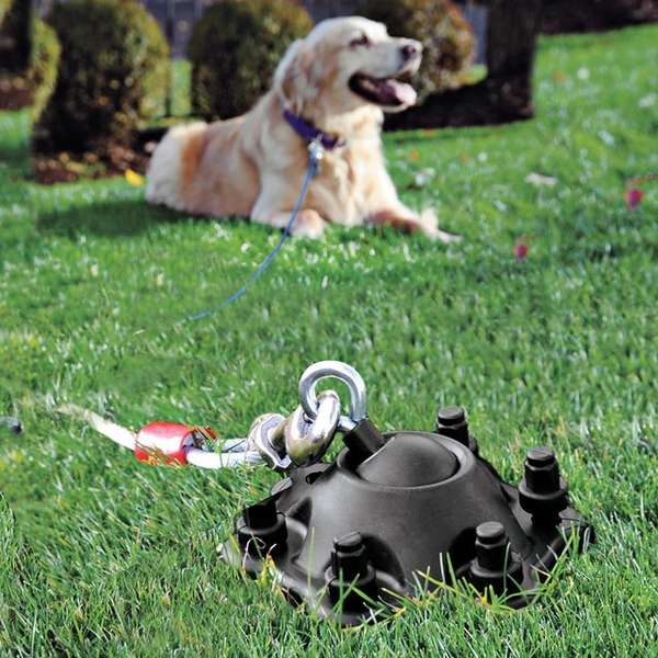 8 Backyard Ideas To Delight Your Dog: Advanced Dog Anchors : Pet Tether