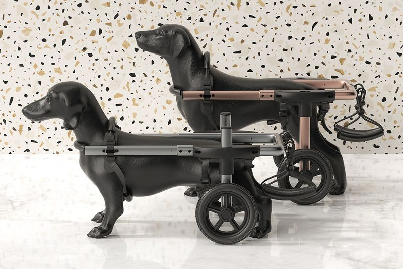 Canine Mobility Support Solutions