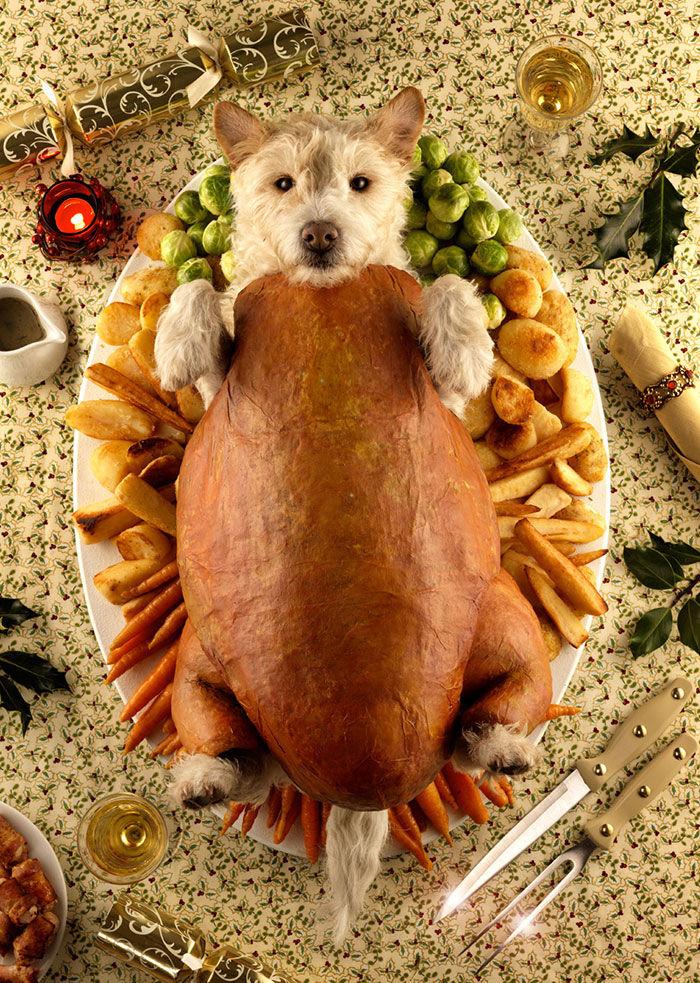 Festive Dog Dressups