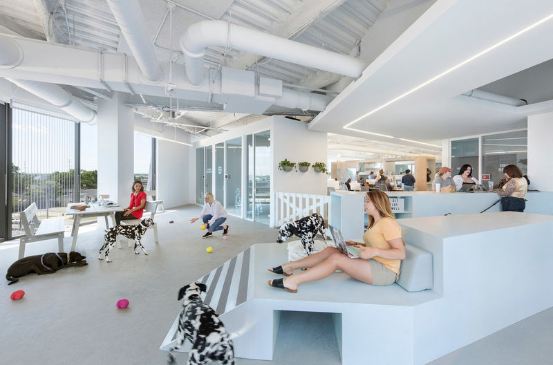 Contemporary Pet-Friendly Office Spaces