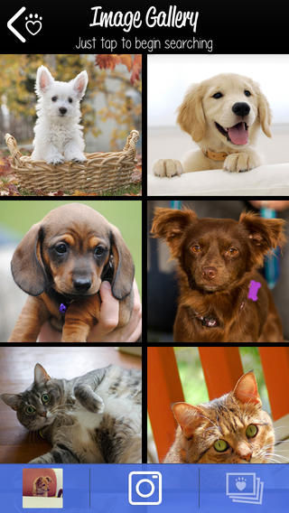 Lookalike Pet Adoption Apps