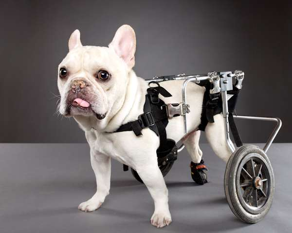 Handicapped Canine Captures