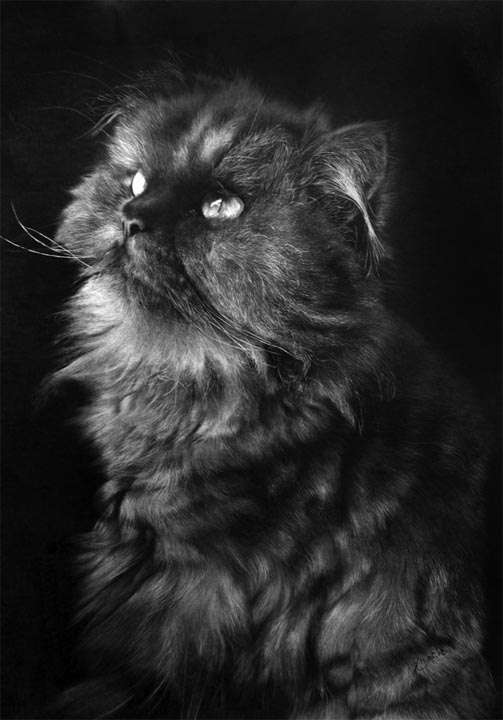 Photorealistic Pet Illustrations